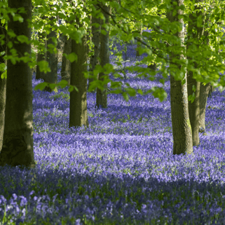 Natural burial grounds in the UK